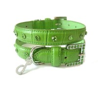 Crocodile Rocks Dog Collar